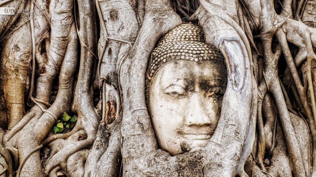 Der berühmte Buddha Kopf in Wat Mahathat